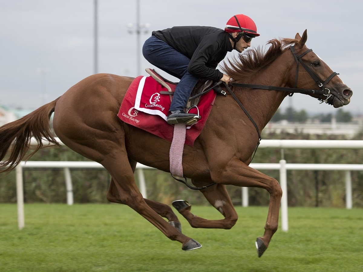 woodbine horse racing betting odds in early