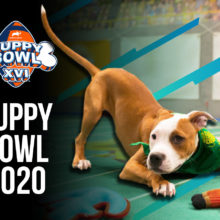 Puppy Bowl Odds & Player Preview